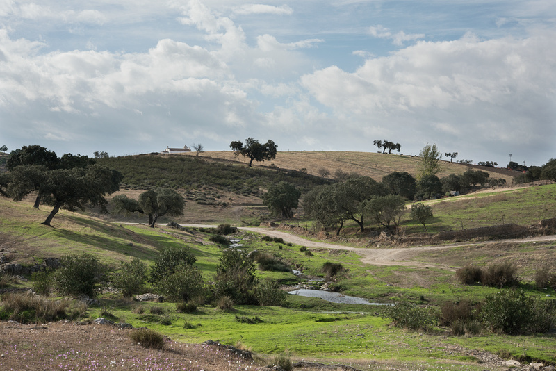 Dehesa at Safara, Portugal