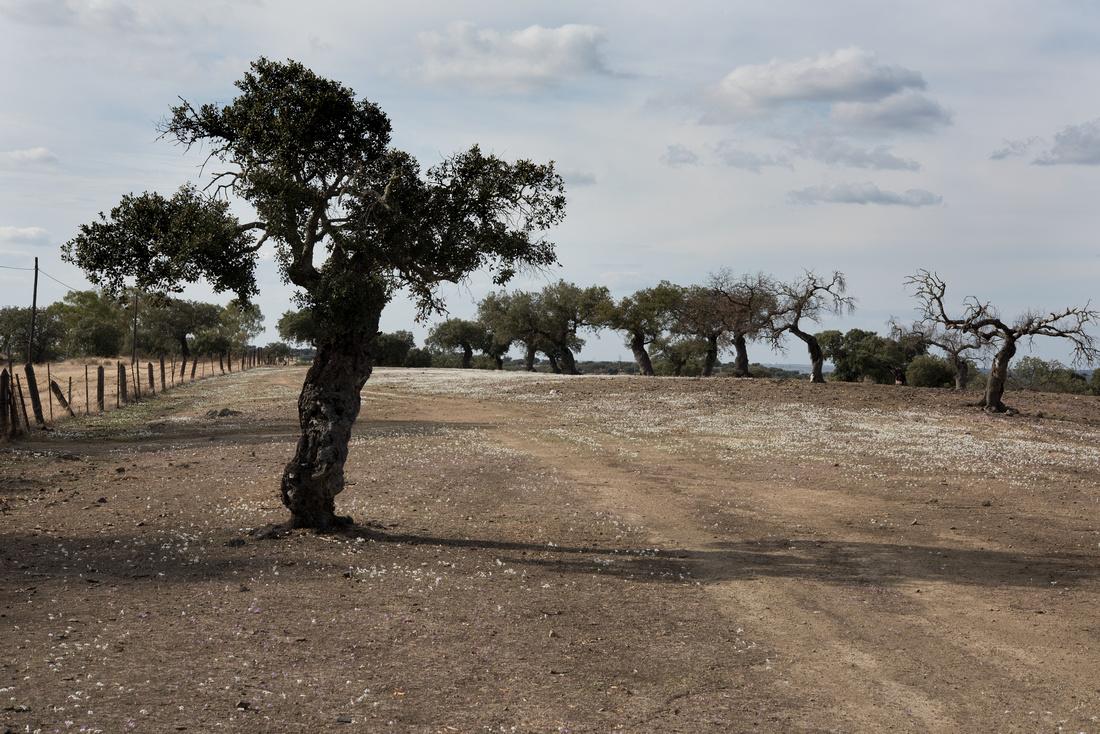 Dehesa at Barrancos, Portugal